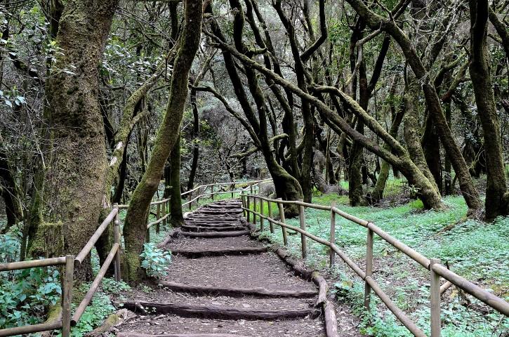 National Park Garajonay in Laguna Grande, the island of La Gomera, Canary Islands, Spain.