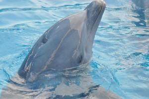 Genova 10 cose da fare e vedere ioviaggio for Acquario tartarughe grandi