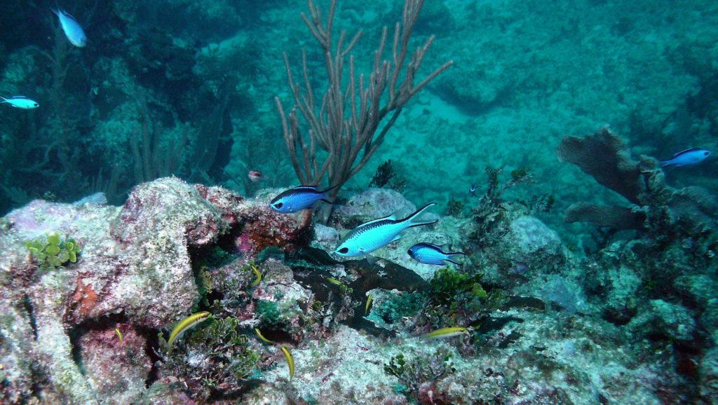 Scuba-diving-Canarie