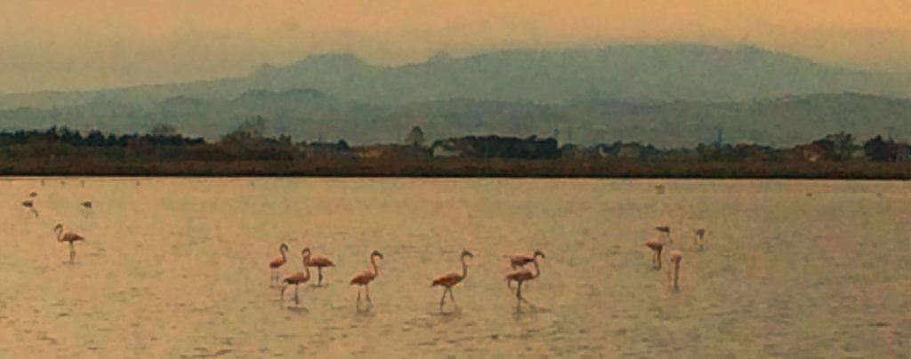 Birdwatching saline di Cervia