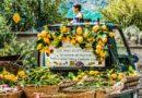L'originale ricetta del limoncello amalfitano