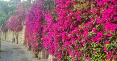 Via Tragara a Capri: strada di sogni e di vite