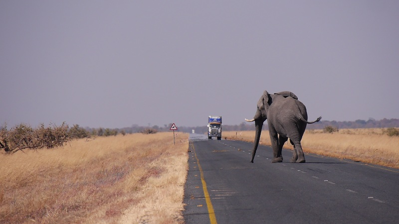 dove andare in viaggio di nozze il botswana