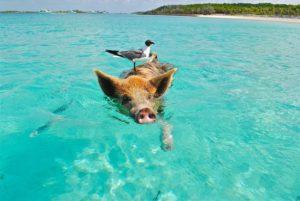 Isola di Pig Beach