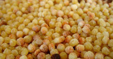 Fregola sarda, pasta di semola, per ricette tradizionale